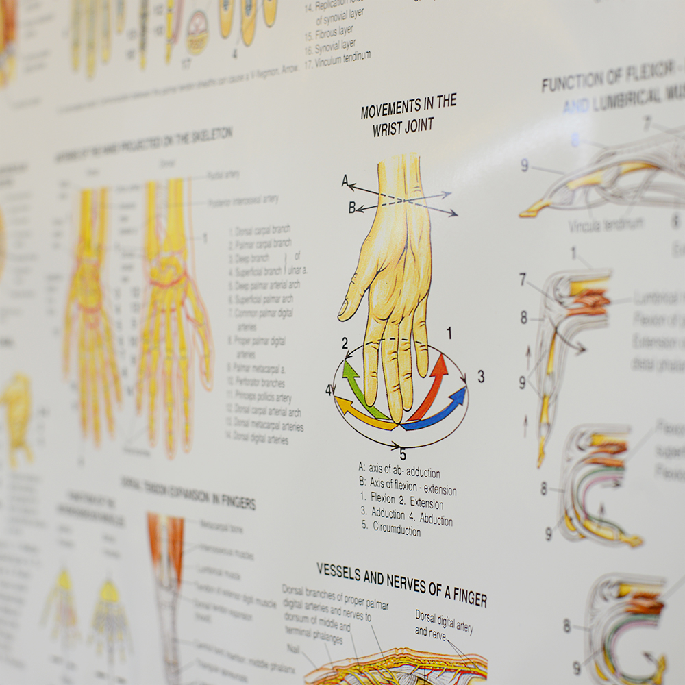 Fisioterapia e Reabilitação